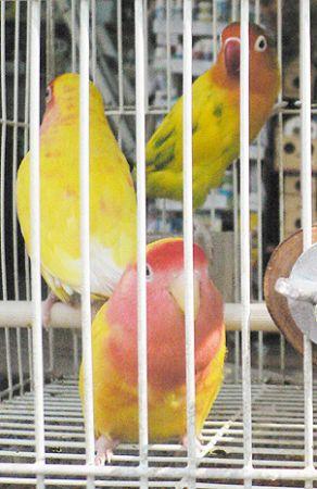 bird market Hong Kong HK